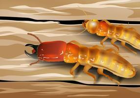 Soldat Termite