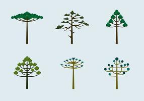 Araucaria trees vector flat