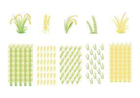 Rice Field and Rice Pattern Vectors