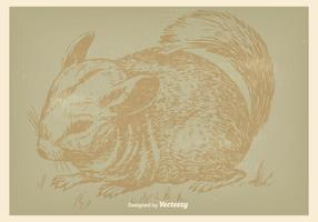 Illustration Vintage Chinchilla