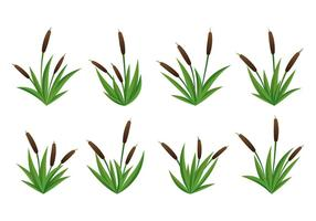 Set av Cattails Vector