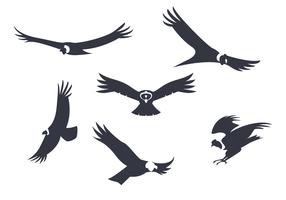 Free Vector Condor