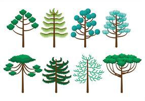 Icone di Araucaria