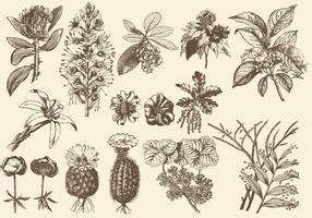 Sepia Exotic Flower Illustrations vector