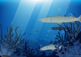 Peces Barracuda juntos en aguas profundas