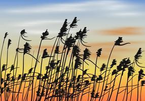 Cañas en el vector de fondo de la puesta del sol