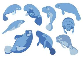 Free Swimming Manatees Vector