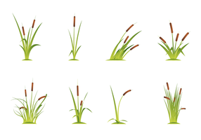 Vector Libre Cattails