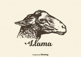 Free Vector Llama Head