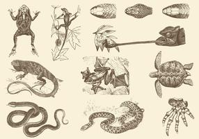 Illustrations de reptiles sépia