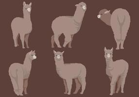 Free Alpaca Icons Vector