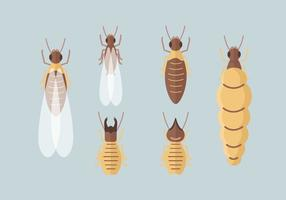 Termite Vector Packs