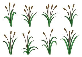 Set Van Cattails Vector