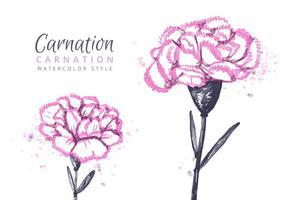 Free Carnation Flowers Background