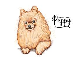 Free Pomeranian Background vector