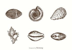 Free Hand Drawn Sea Shells Vektor