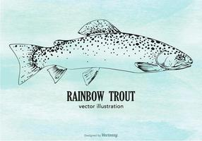 Vector Rainbow Trout