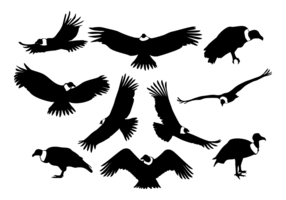 Vecteur silhouettes Condor