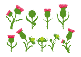 Thistle Flower Vectors
