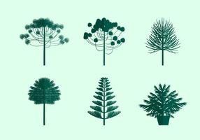Araucaria icon free vector