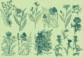 Vintage Thistle Illustrationen