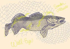 Gratis Walleye Vektorillustration