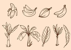 Free Hand Drawn Banana Tree Vector