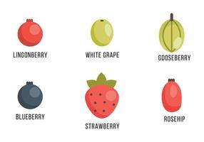Selection of Berries and Grapes vector