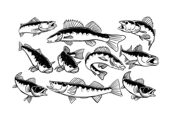 Download Walleye Fish Icons 20 Free Walleye Fish Icons Download Png Svg