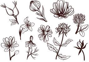 Vectores libres de las flores del té