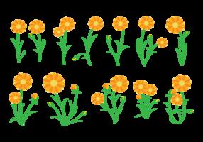 Calendula Vector de la planta