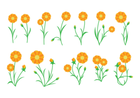 Vecteur de la plante du calendula