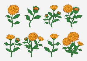 Calendula Vector Icons