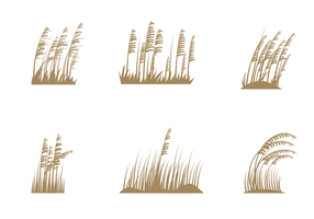 Free Sea Oats Vector