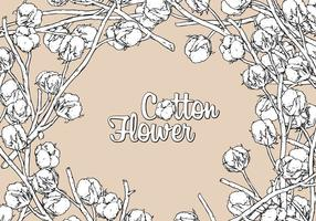Cotton Flower Hand Drawing Free Vector