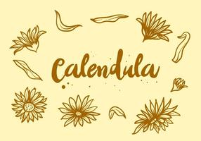 Free Calendula Flower vector