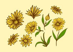 Gratis Calendula Flower vector