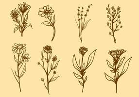 Vettore libero della pianta medicinale