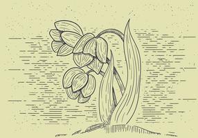 Illustré détaillé de fleurs vectorielles détaillées