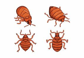 Bed bug cartoon character illustration vector