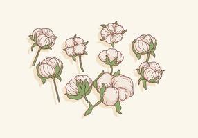 Bomull Blommor Vektor