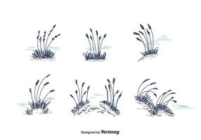 Hand Drawn Sea Oats Vector