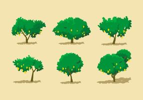 Mango Tree Vector Sets