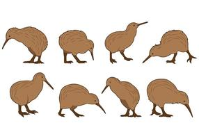 Set Of Kiwi Bird Vectors