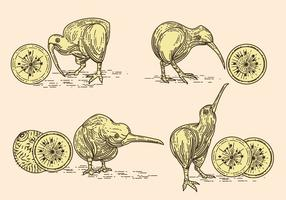 Vector Image of Nice Kiwi Birds and Kiwi Fruits