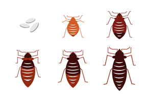 Bed Bug Vector gratuito