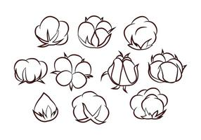 Free Cotton Flower Vector