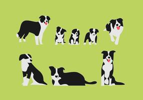 Sets Border Collie Vector Illustrarion