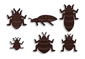 Bed insect vector