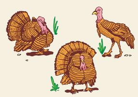 Wild turkey pose illustration